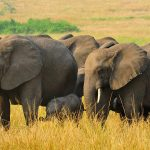 Wildlife Tours in Uganda