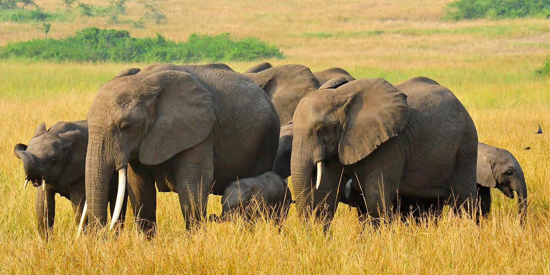 Wildlife Tours in Rwanda & Uganda