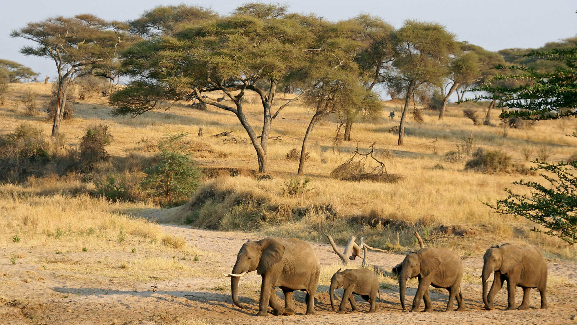 Best Tourist Places to Visit in Tanzania