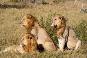 Tanzania Safaris in Serengeti
